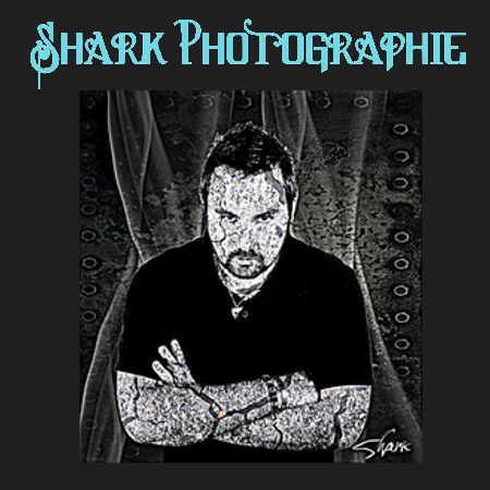 shark photographie
